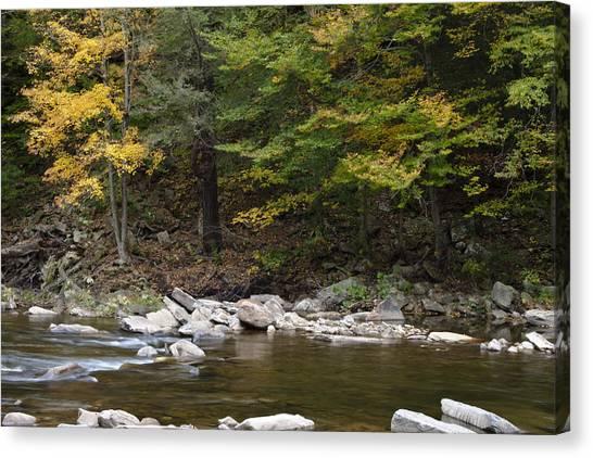Loyalsock Creek Flowing Gently Canvas Print