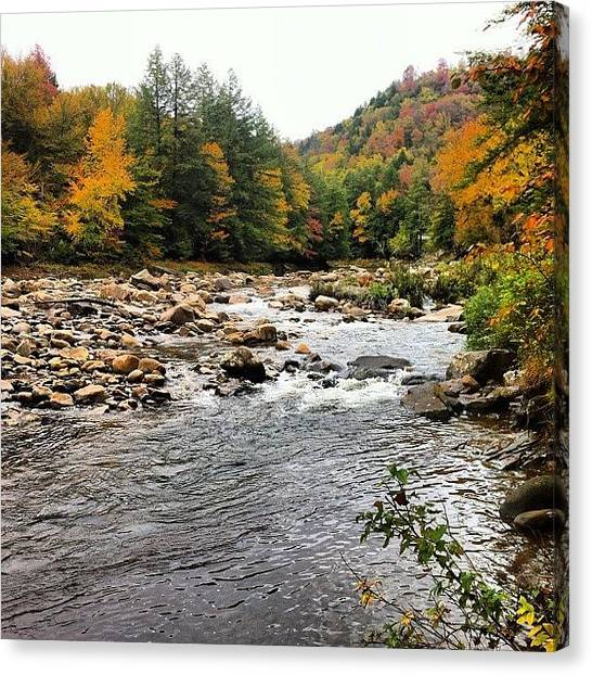 Fly Fishing Canvas Print - Loyalsock Creek Sullivan County Pa by Dave M