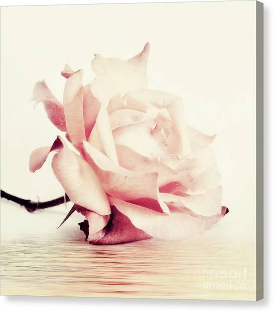 Rose Canvas Print - Lucid by Priska Wettstein