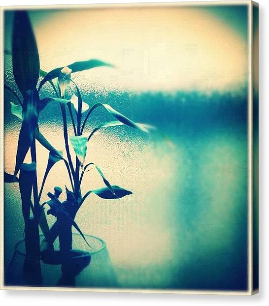 Lucky Canvas Print - #lucky #bamboo #luckybamboo #chinese by Luke Fuda