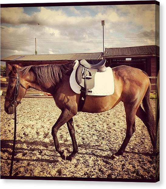 Thoroughbreds Canvas Print - Lunging Time:) by Caitlin Hay