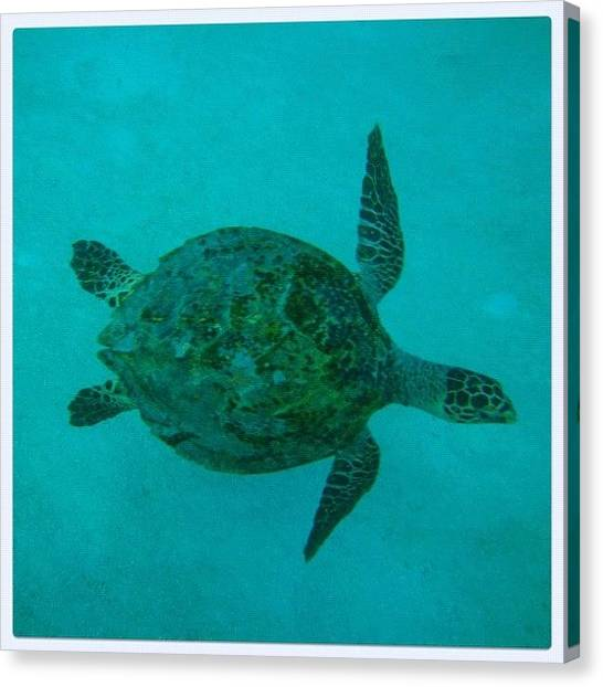 Sea Turtles Canvas Print - Luv The Nature. Luv The Turtle by Mahid Abdulrahman