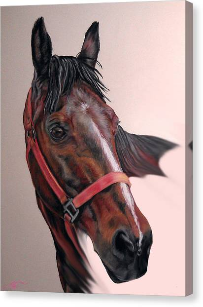 Lynette's Quarter Horse Canvas Print by Ann Marie Chaffin
