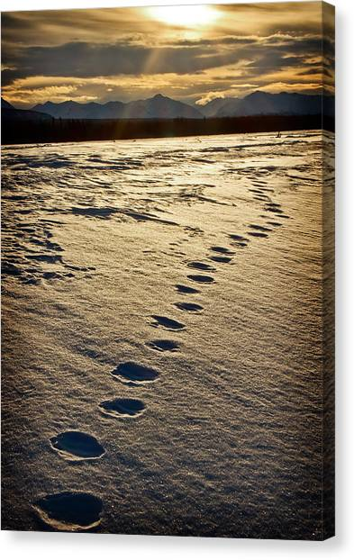 Lynx Tracks Canvas Print