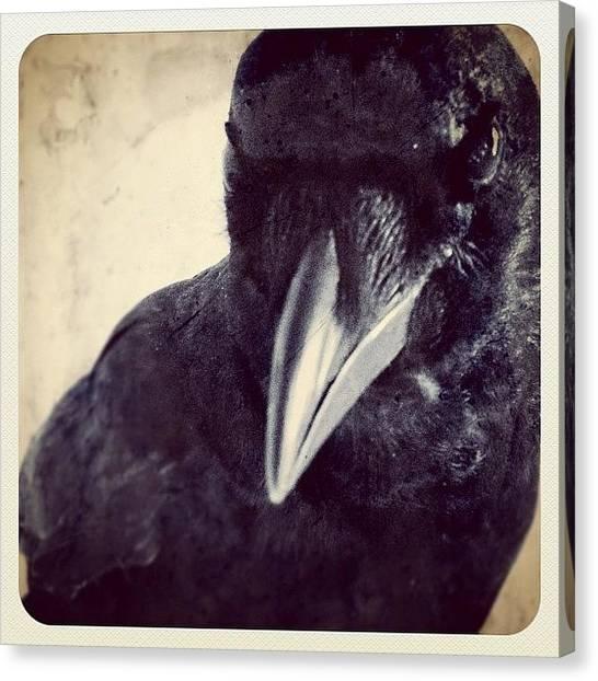 Ravens Canvas Print - Ma Corneille by Isabel Poulin