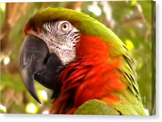 Macaw Alert Canvas Print by John From CNY