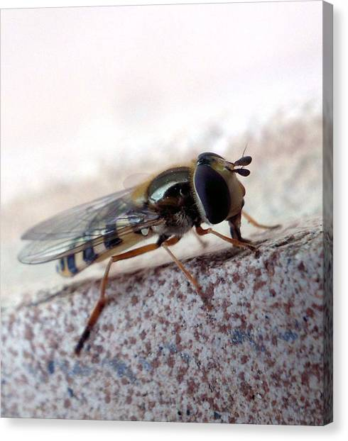 Macro Insect Canvas Print by Ernestas Papinigis