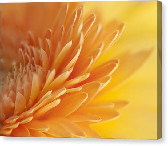 Macro Of Petals Canvas Print