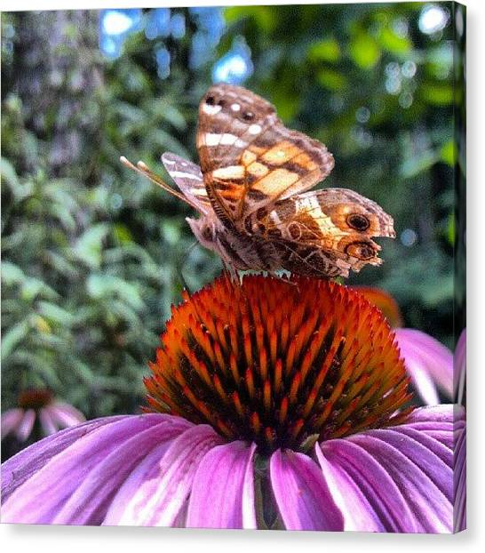 Droid Canvas Print - #macro #pink #echinacea #coneflower by Carla From Central Va  Usa