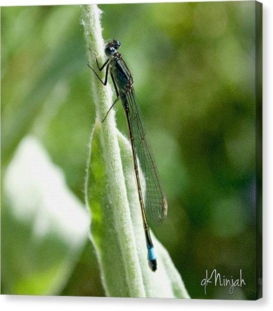Dragons Canvas Print - Macro Shot Of Dragonfly. by Qk Ninjah