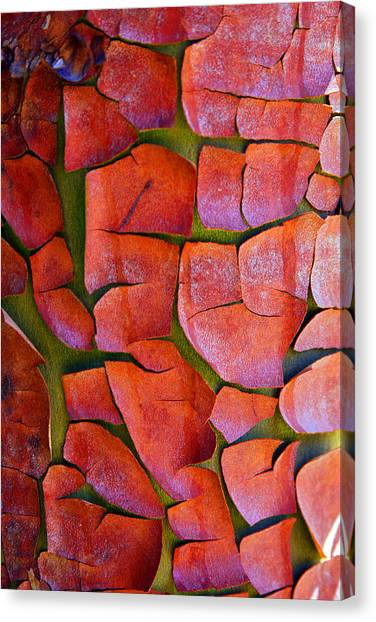 Madrone Canvas Print