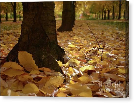 Magic Autumn  Canvas Print