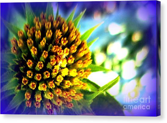 Magic Flower Canvas Print by Maria Scarfone