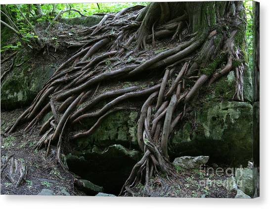 Magical Tree Roots Canvas Print by Chris Hill