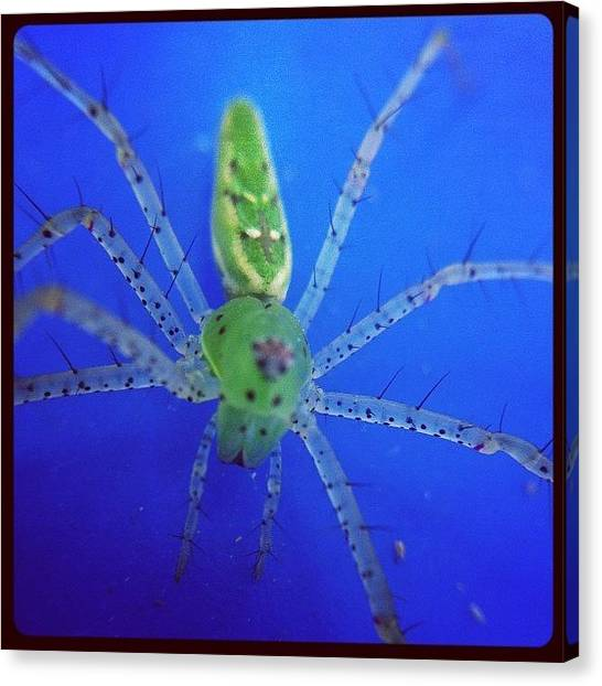 Spiders Canvas Print - Magnolia Green Jumper 2 by Dave Edens