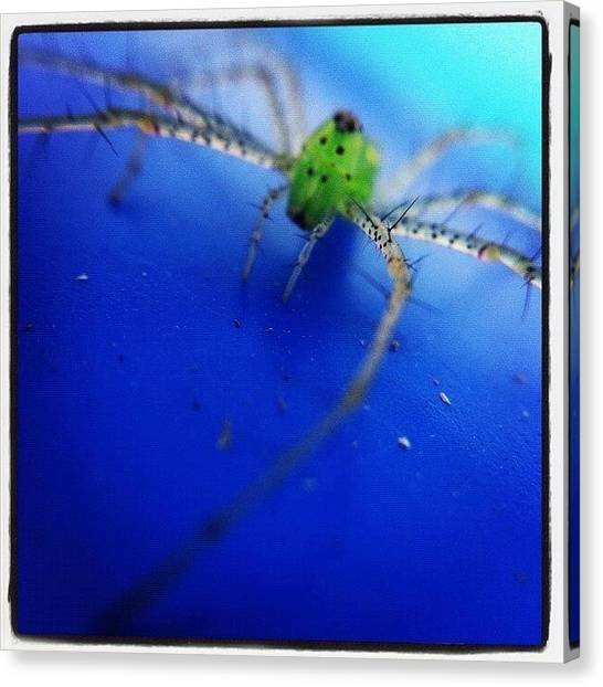 Spiders Canvas Print - Magnolia Green Jumper by Dave Edens