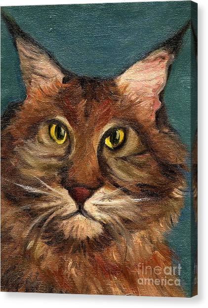 Mainecoon The Cat Canvas Print by Kostas Koutsoukanidis