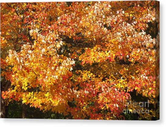 Maine'safall Leaves Canvas Print by Charles  Ridgway