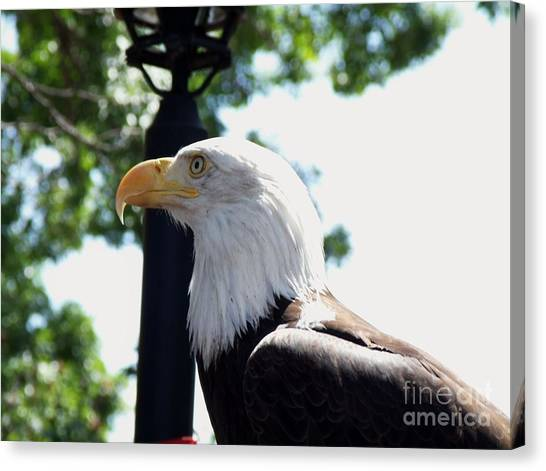 Preditory Canvas Print - Majestic by Donna Parlow