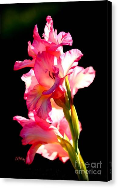 Majestic Gladiolus Canvas Print