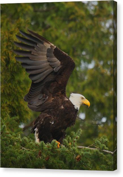 Canvas Print - Majestic by Larry Robinson