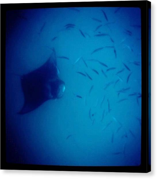 Reef Sharks Canvas Print - #maldives #manta #fish #sea #scuba by Mahid Abdulrahman