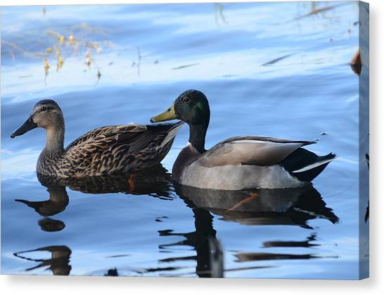 Mallard Couple Canvas Print by Michael Carrothers