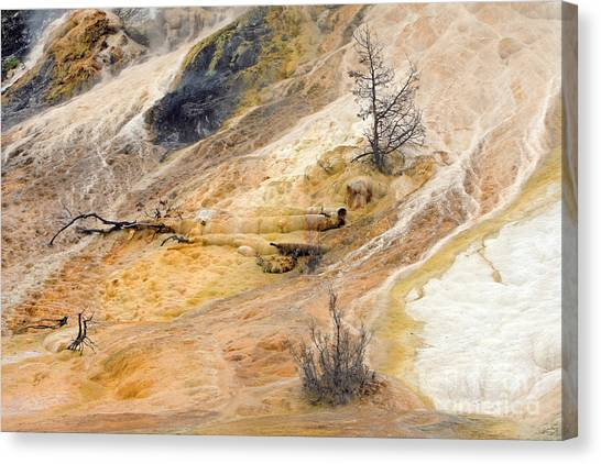 Mammoth Hot Springs Canvas Print by Charline Xia