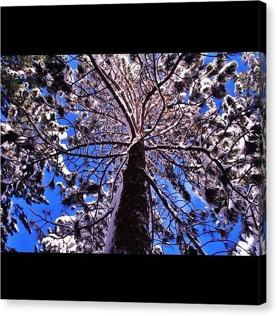 Snowboarding Canvas Print - Mammoth-winter Of 2011. Looking Up The by Tyler Rice