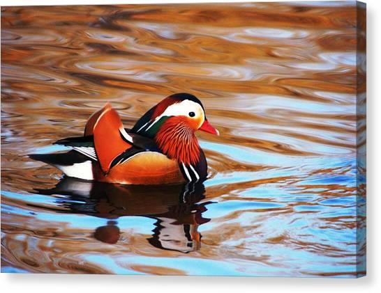 Mandarin Duck Canvas Print by Juan  Cruz