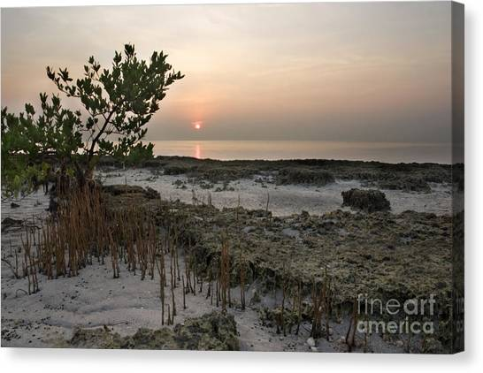 Mangrove Trees Canvas Print - Mangrove At Low Tide by Matt Tilghman