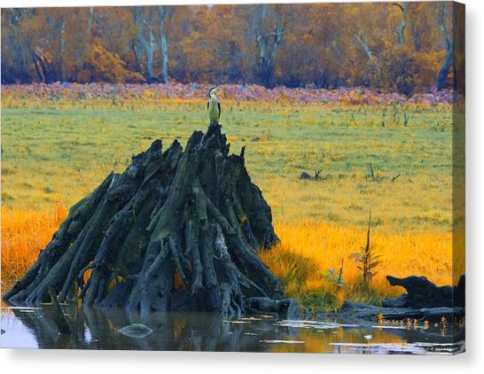 Mangrove Trees Canvas Print - Mangrove Lookout by Douglas Barnard