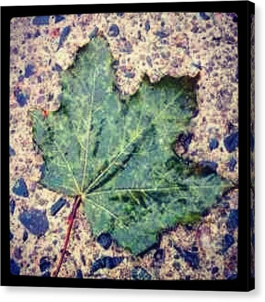 Wet Canvas Print - #mapleleaf #toronto #ontario #canada by James Roberts