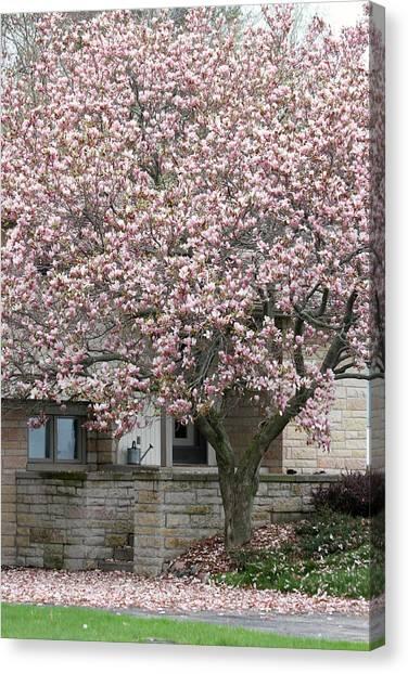 Marinette Magnolia Canvas Print by Mark J Seefeldt