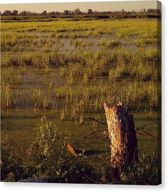Marshes Canvas Print - #marsh #goldenhour #android by Nicole Ulrich