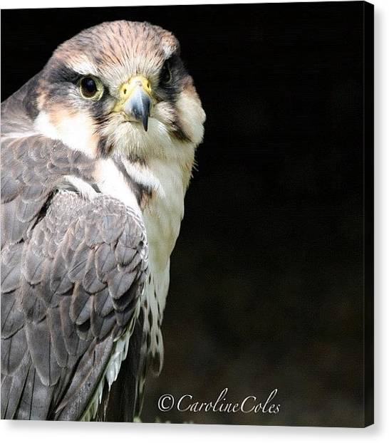 Ornithology Canvas Print - Master Of The Skies by Caroline Coles