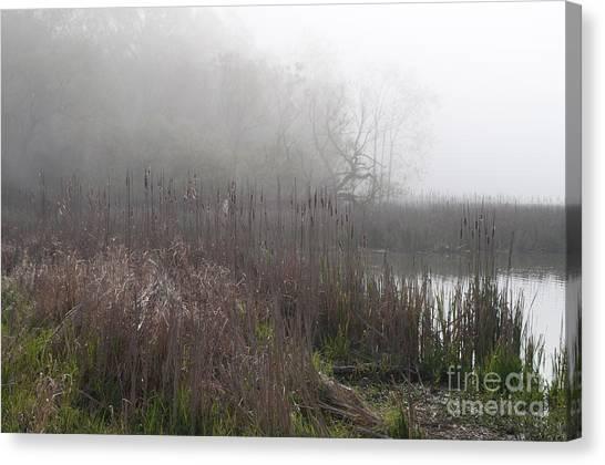 Mclaughlin Bay In The Fog Bulrushes Canvas Print by Gary Chapple