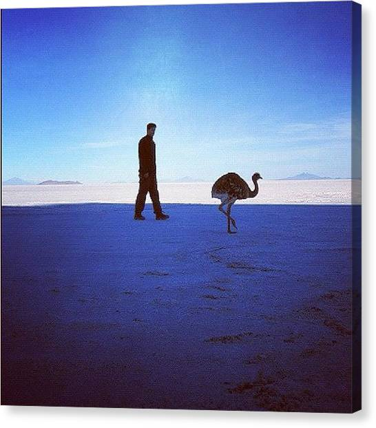 Ostriches Canvas Print - #me #myself #i #ostrich #bolivia #salar by Alon Ben Levy