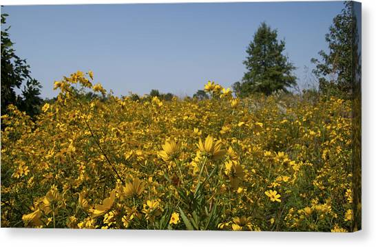 Canvas Print - Meadow At Terapin Park by Charles Kraus