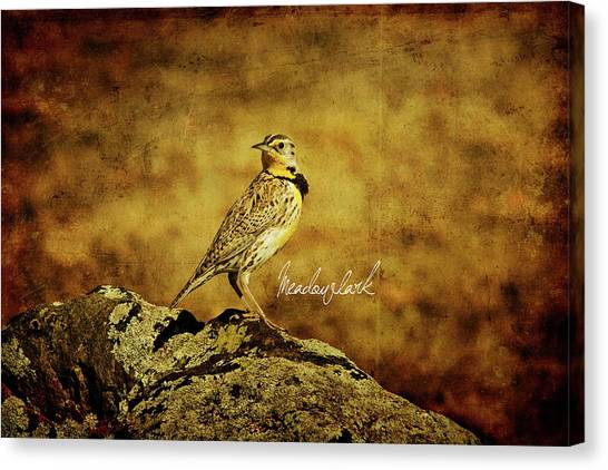 Meadowlarks Canvas Print - Meadowlark by Lana Trussell