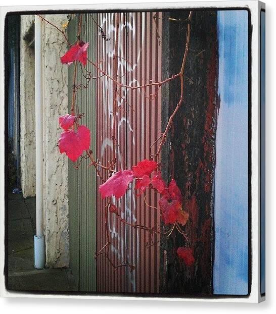 Graffiti Walls Canvas Print - Melbourne Autumn by Mojo Photo