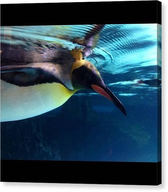 Penguins Canvas Print - #melbourneaquarium #penguin #underwater by Tony Keim