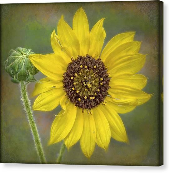 Mellow Yellow Canvas Print by Hazel Billingsley