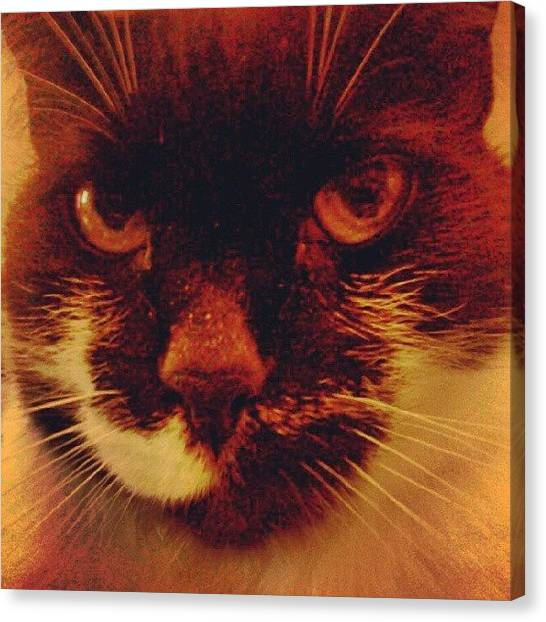 Smallmouth Bass Canvas Print - Meow E. Cat by Stacy C Bottoms