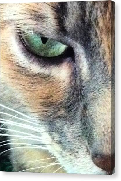 Meow Meow Canvas Print by Tia Anderson-Esguerra