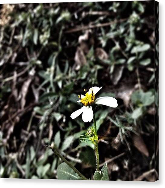 Iphone 4s Canvas Print - Messing Around On Snapseed #flower by Emily W
