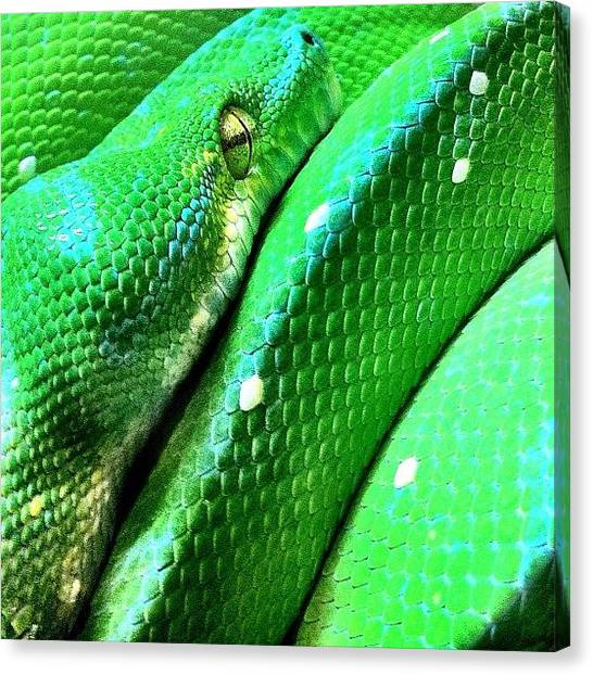 Reptiles Canvas Print - Met This Guy At Queensland Museum by Brett Starr