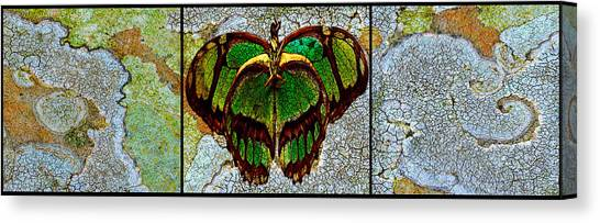 Canvas Print - Metamorphic Muse by Fine Art  Photography