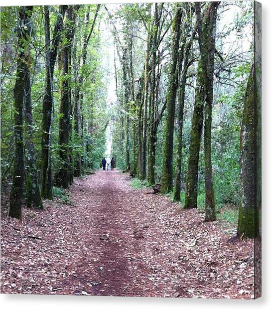 Forest Paths Canvas Print - Metropolitano Valle by Fausto Trujillo