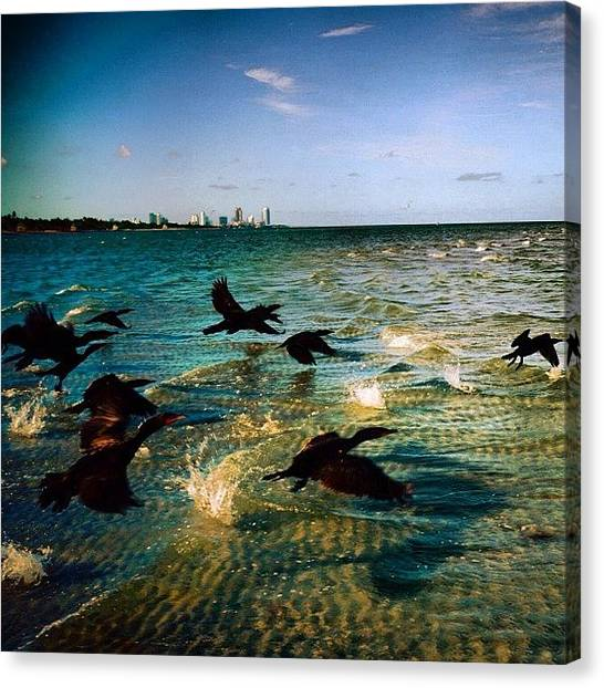 Flying Canvas Print - #miami #nature #birds #sea #beach #keys by Joel Lopez